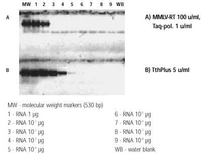 Comparison of sensitivity of RT-PCR with TthPlus™ DNA polymerase and MMLV-RT