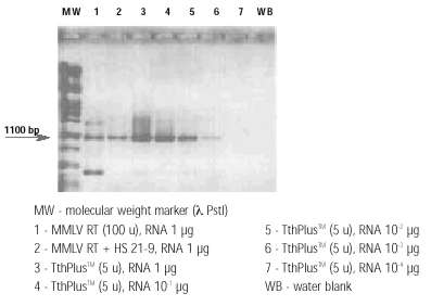 Comparison of RT-PCR with TthPlus™ DNA polymerase and MMLV-RT in 16S-rRNA system